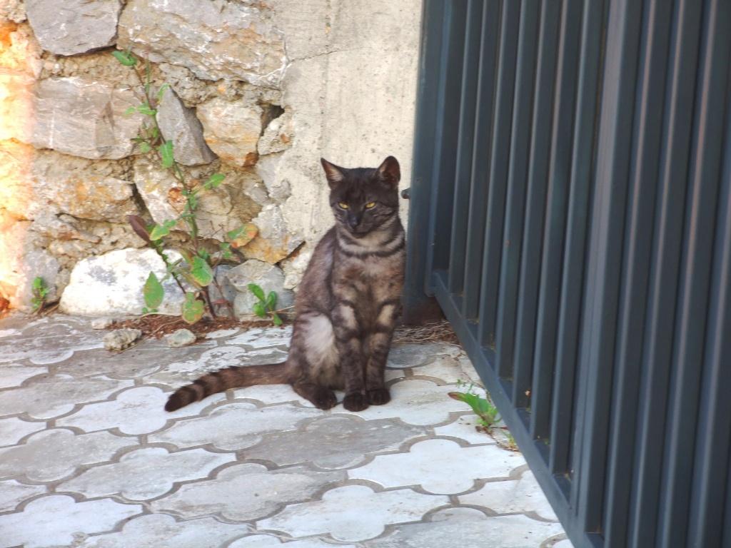 Nasumična mačka