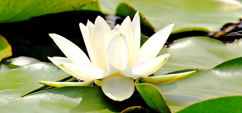 Body & Soul Meditacija