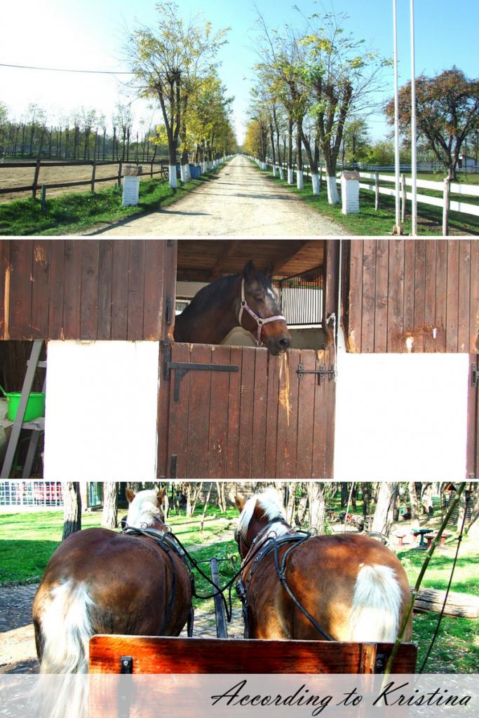 Salaši su karakteristični za Vojvodinu © According to Kristina