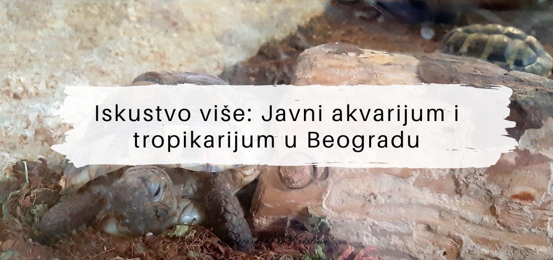 Iskustvo više Javni akvarijum i tropikarijum u Beogradu © According to Kristina