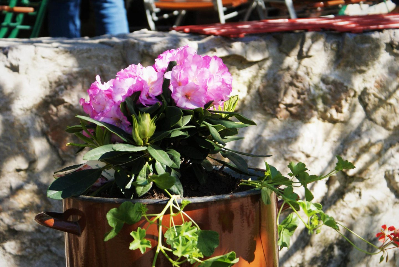 Proleće je idealno vreme za posetu Ljubačkim dolinama © According to Kristina