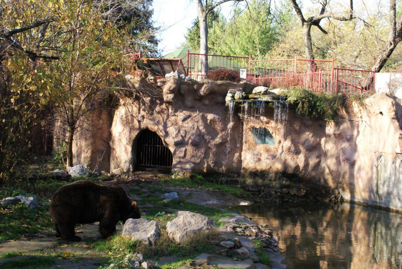 Medved u zoološkom vrtu na Paliću © According to Kristina